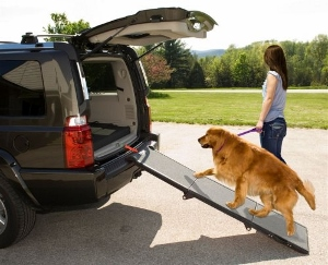 Purchasing a Dog Ramp for a Car