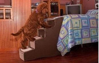 4 Important Reasons Why You Should Invest In Bed Stairs for Dogs