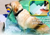 Give Your Dog a Helping Hand! Pool Steps for Dogs: Paws Aboard Pool Pup Dog Ladder Steps