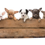 Selecting a Dog Crate; What You Need to Know!