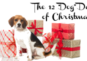 "The 12 ""Dog"" Days of Christmas:  Perfect Presents for Your Pooch!"